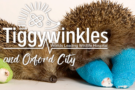 Tiggiwinkles and Oxford City